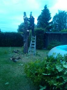 Vellen boom (Mariakerke)